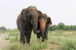 India Elephant hospital