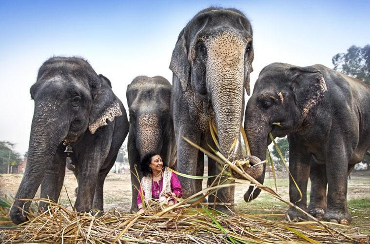 The Truth about Elephants – Pride of India