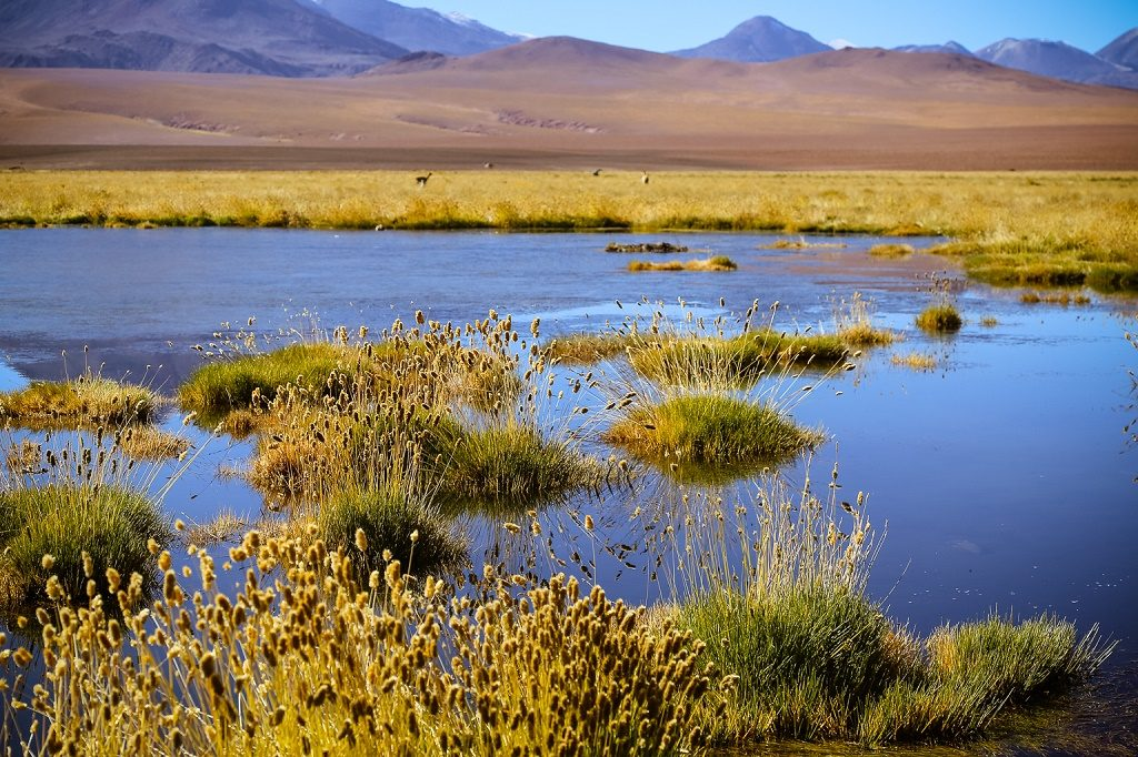 chile wetlands atacama