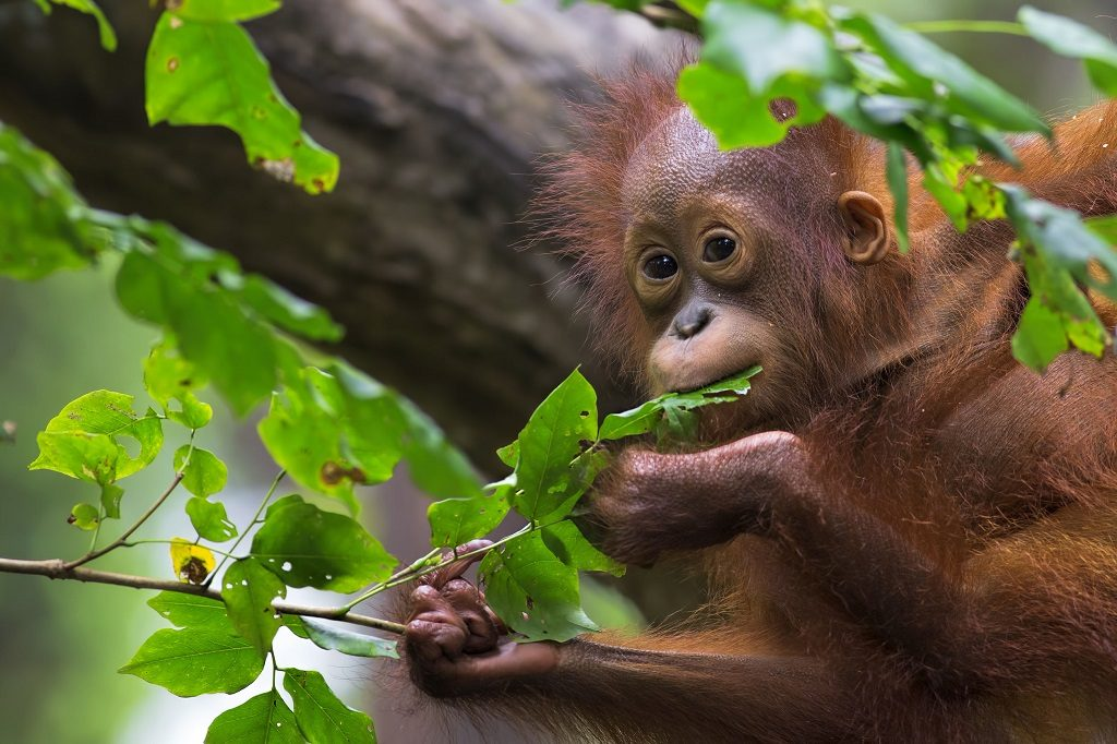 Must See Borneo Coral Reefs Secluded Beaches And Cheeky