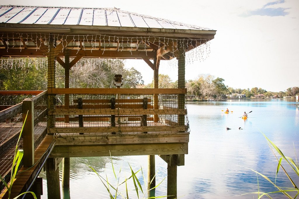 From the overwater platform or on the water in a kayak, the nature sightings at Homosassa Wildlife State Park are all around you.