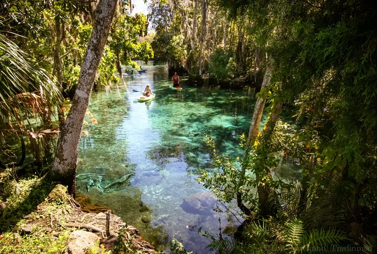 The crystal clear aqua springs at Three Sisters Springs