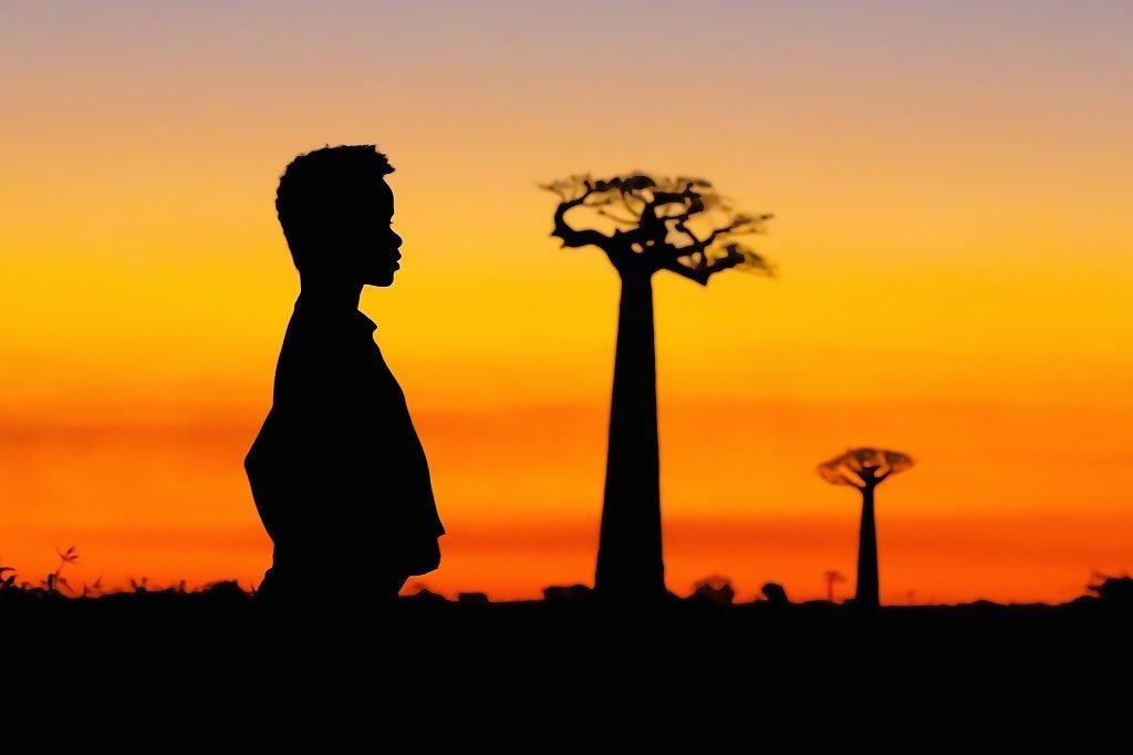 The Malagasy baobabs - a unique biological and cultural heritage