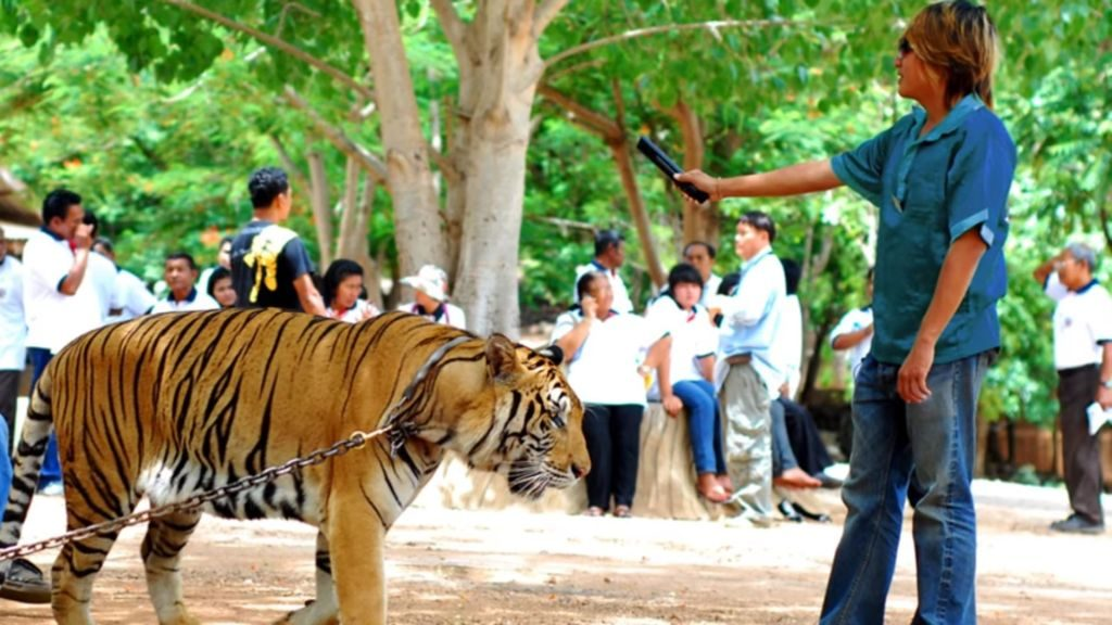 say no to Tiger Selfies