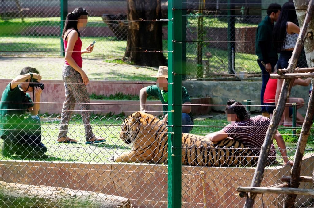 Tourists pose with captive tigers at Tiger Kingdom Phuket, Thailand.