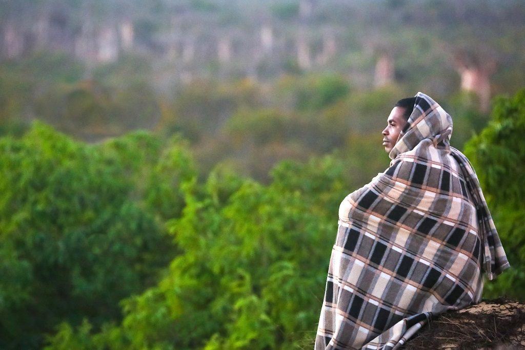 Madagascar baobabs wilfried-ramahafaly_1_hd