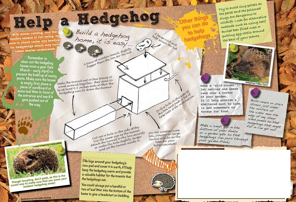 how to make your garden hedgehog friendy Infographic