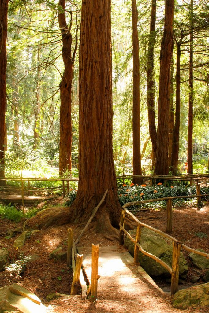Grounds at Stern Grove where the free Stern Grove Festival and Shakespeare in the Park takes place, San Francisco