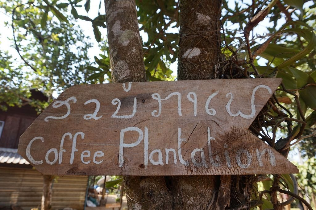 bolaven-plateau_coffee-plantantion_laos-1024-x-681