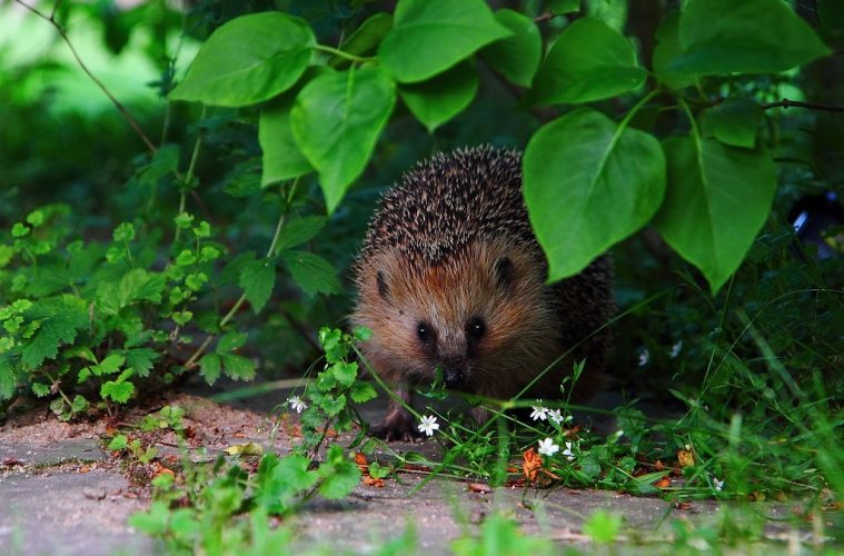 how to make your garden hedgehog friendly