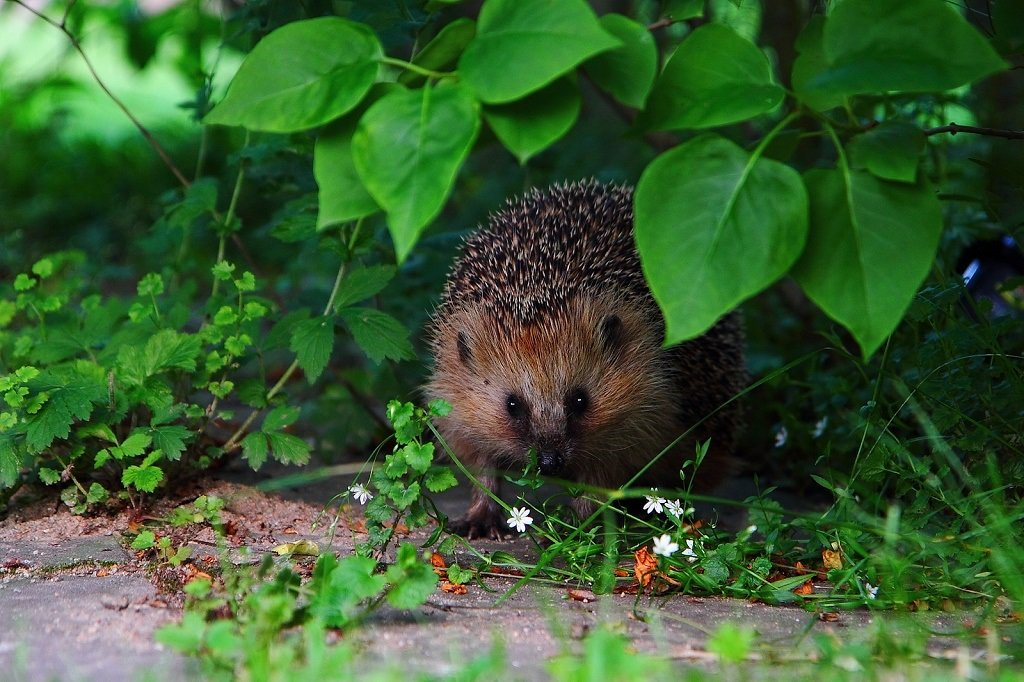 The Latest Hedgehog Review Focuses on Politics and the ...