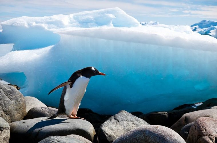 penguins antarctica places to visit before they disappear