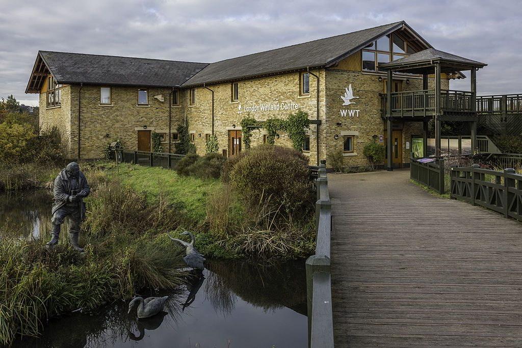 Day Trips from London: London Wetland Centre
