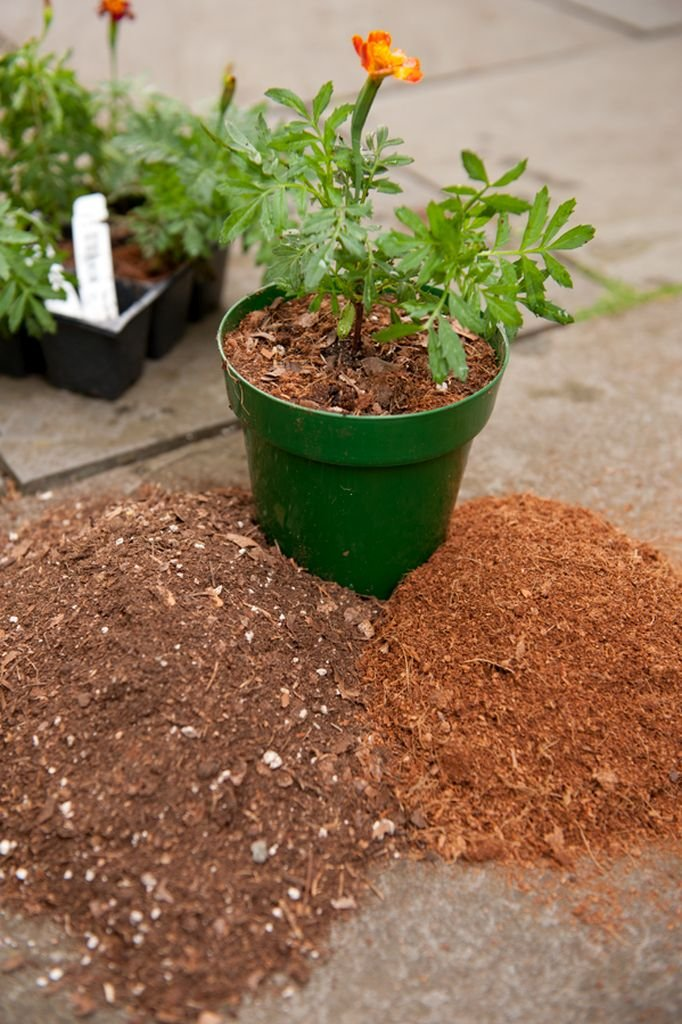 Do you know where your potting soil comes from ecophiles for What does soil come from