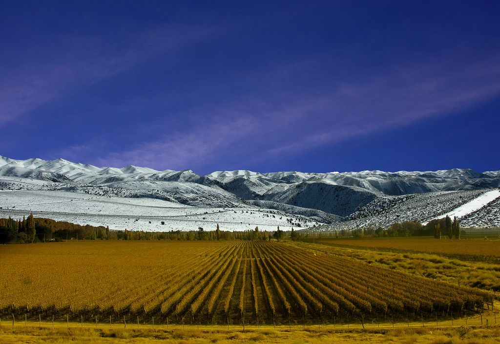 Vineyard Mendoza