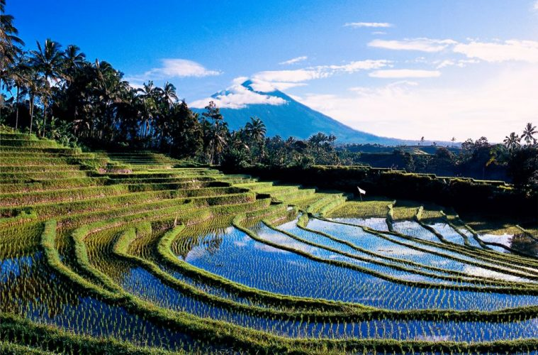 Indonesia Blimbing at Bali