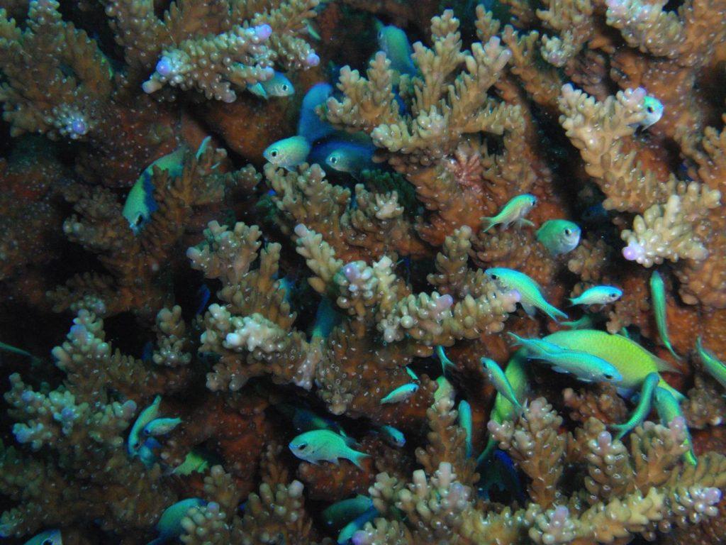 diving in Japan - Okinawa Kerama Islands