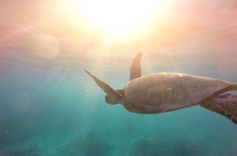 turtle singer island