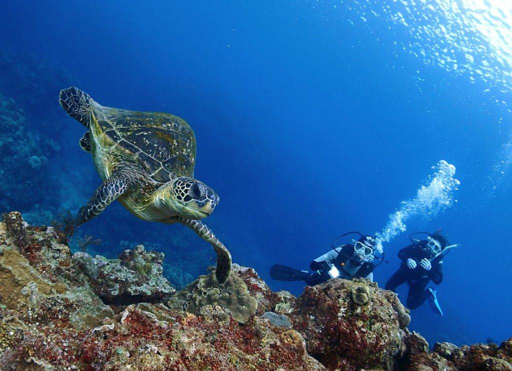 Tokunoshima turtle Yamachan diving in Japan