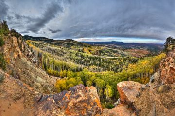 Fall color in the Abajo Mountains.
