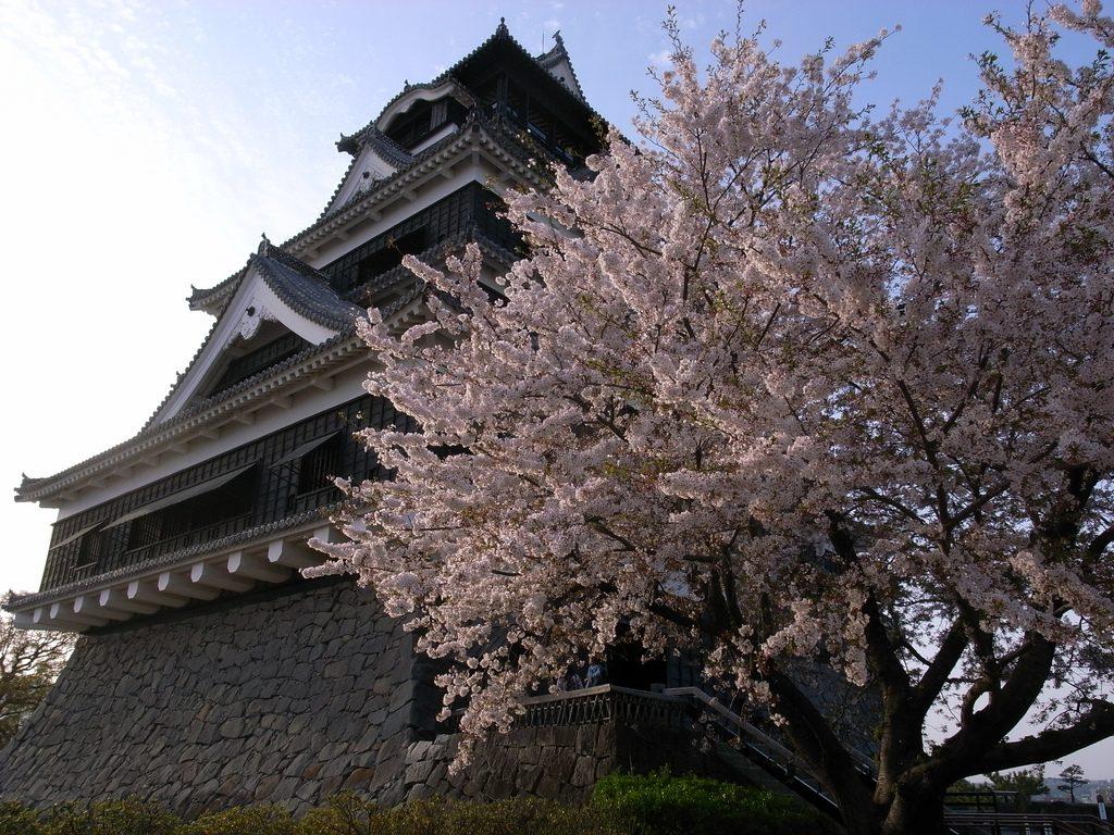 Kumamoto Castle Japan cherry blossom
