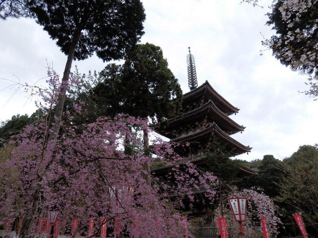 Daigo-ji Temple Japan cherry blossom