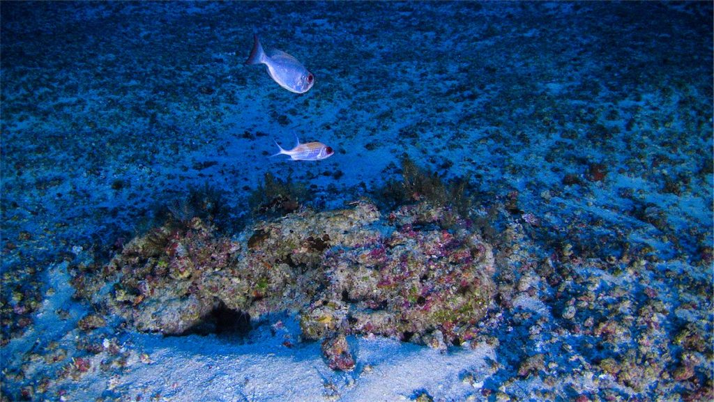 Amazon reef first images
