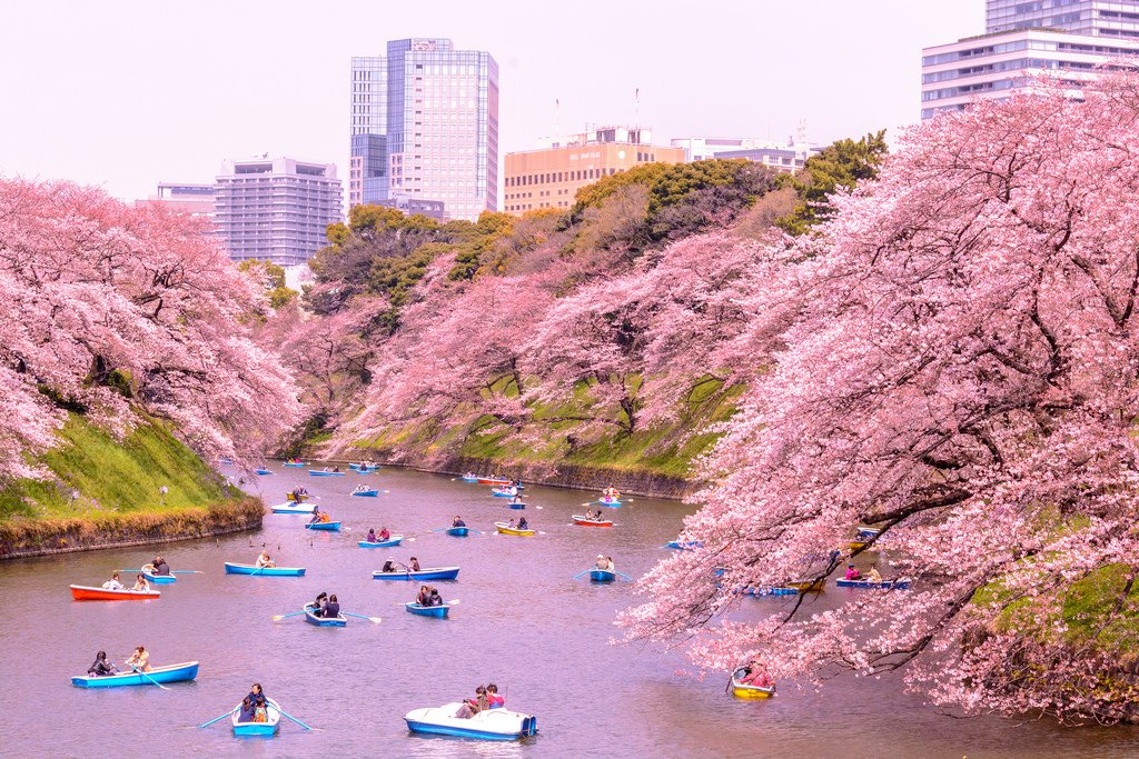 The Best Places To See Cherry Blossoms In Japan