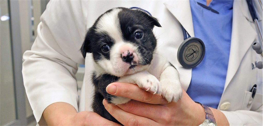 ASPCA puppy rescue