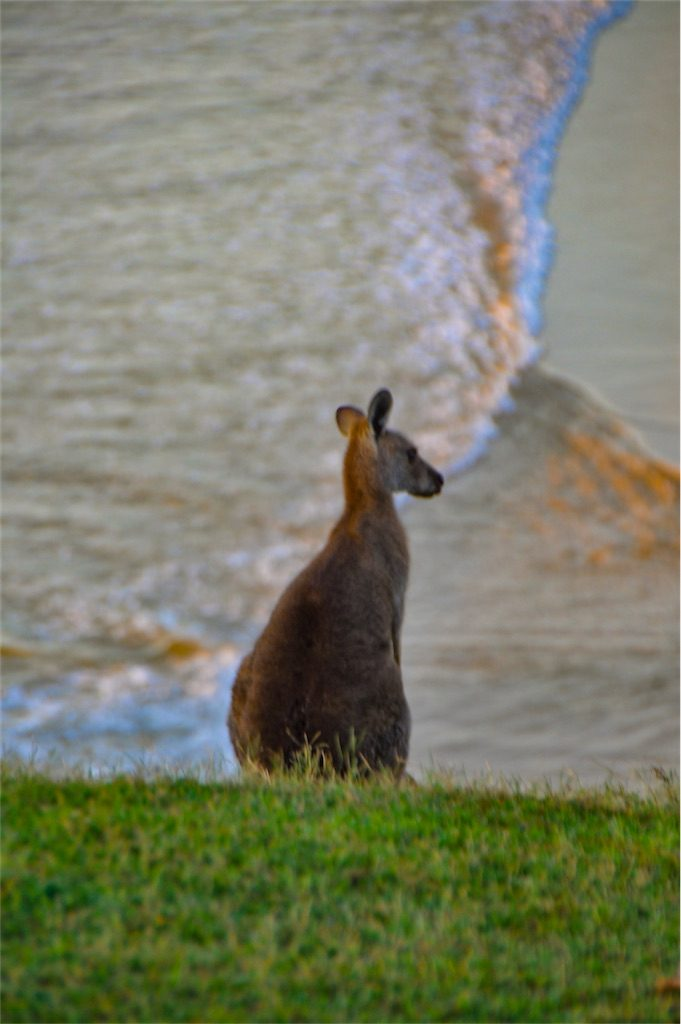 Kangaroo beach Look At Me Now Headland Australia