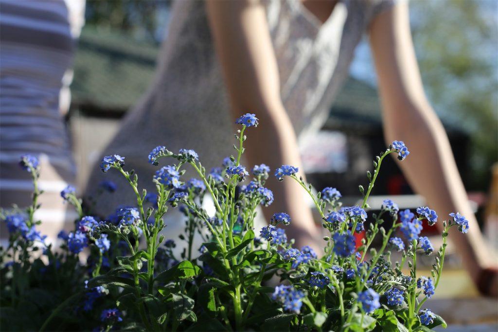Gardener and Flowers