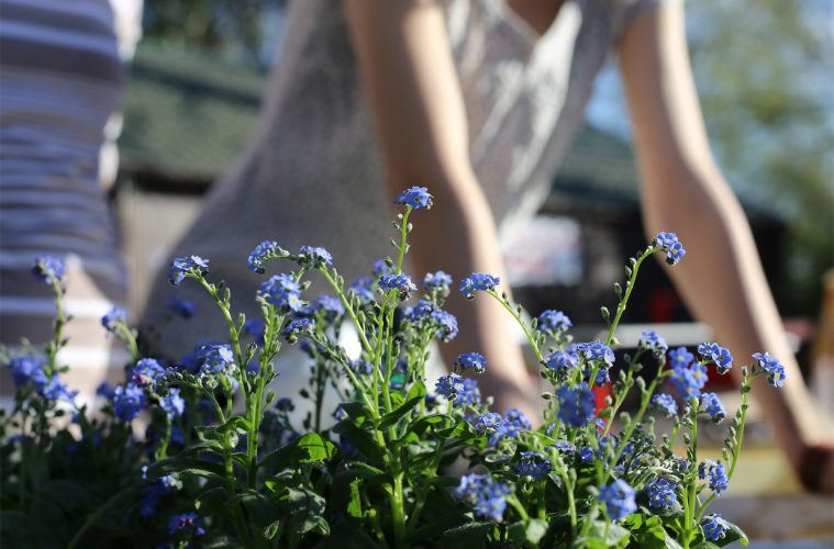 10 Tips for a truly Green Garden this Spring