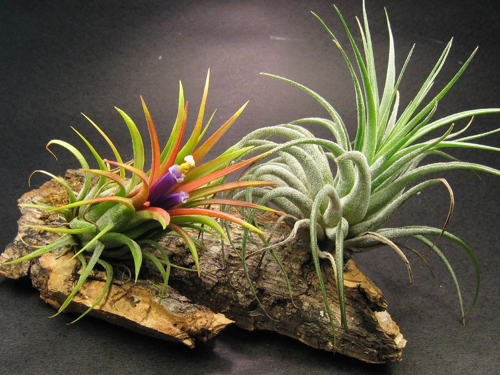 Online Shop Home Decor Diy What Are Air Plants And How To Grow Your Own