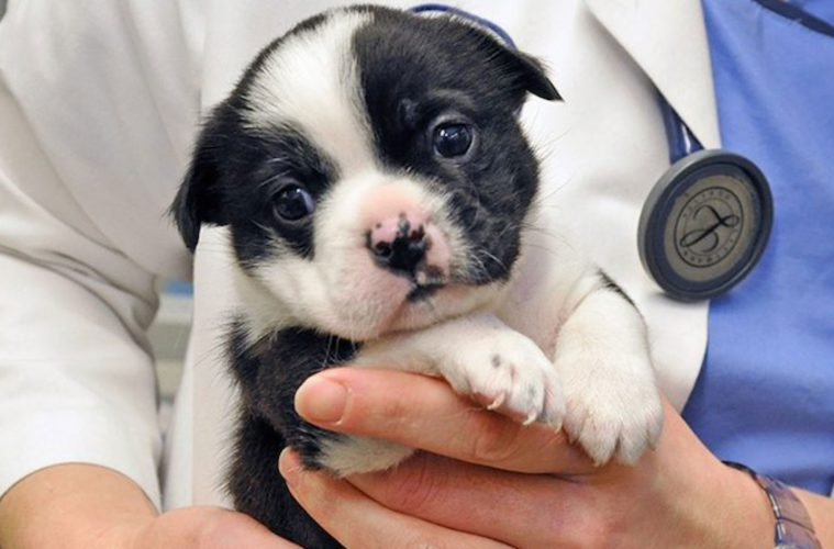 ethan-aspca-animal-hospital puppy rescue