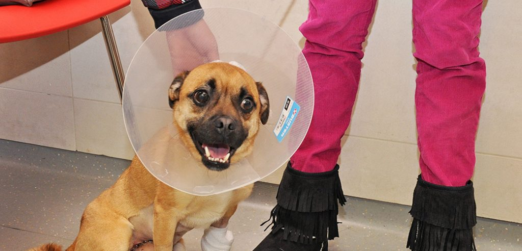 mugzee_puppy rescue