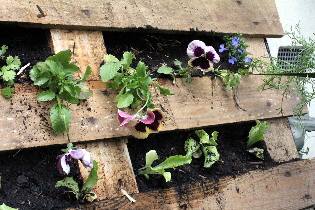 pallet garden with flowers