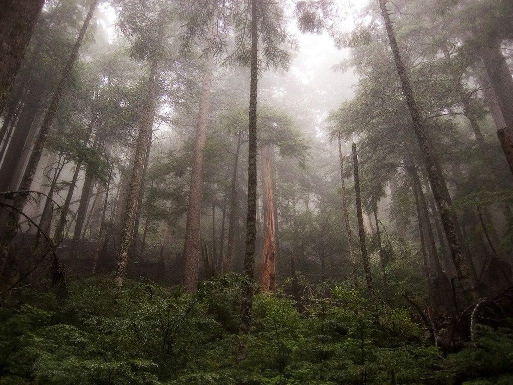 Mount Rainier National Park National Parks