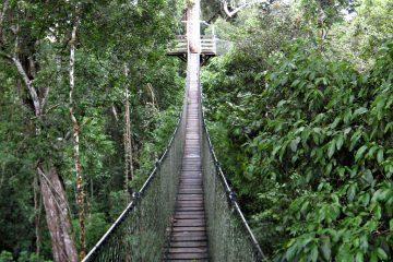 Canopy Walkway Inkaterra