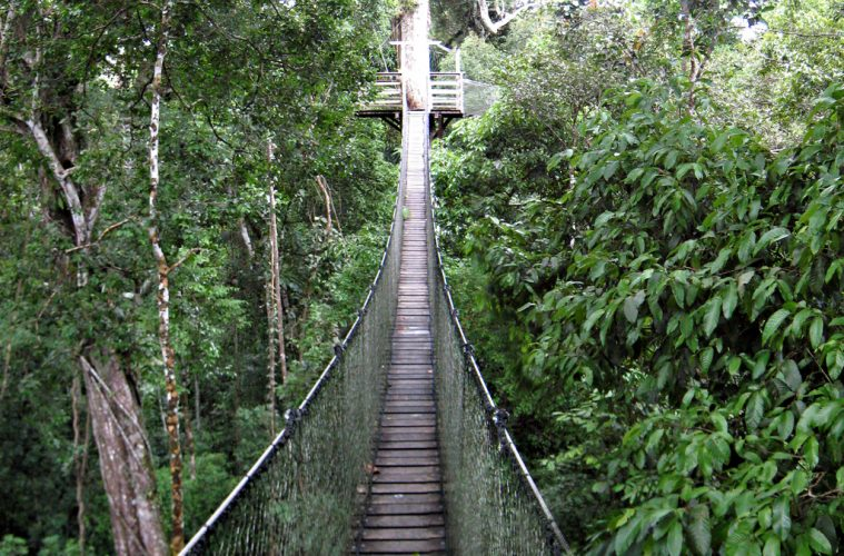 Canopy Walkway Inkaterra & The 9 Most Incredible Canopy Walkways around the World