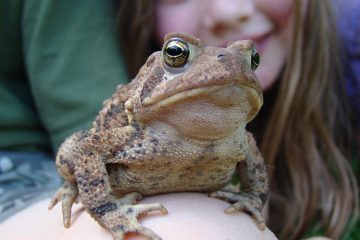 Froglife Toad patrol how to save toads