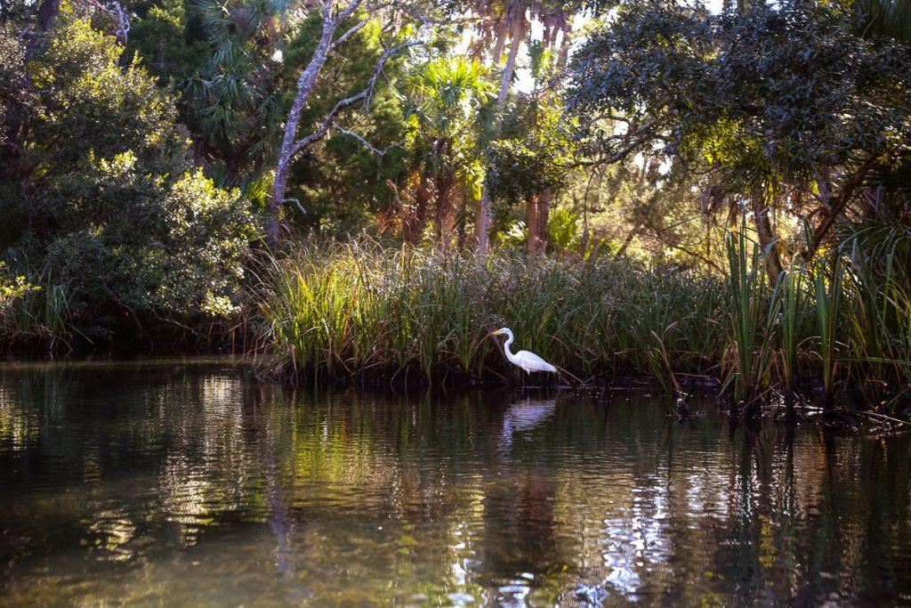 florida Chassahowitzka National Wildlife Refuge