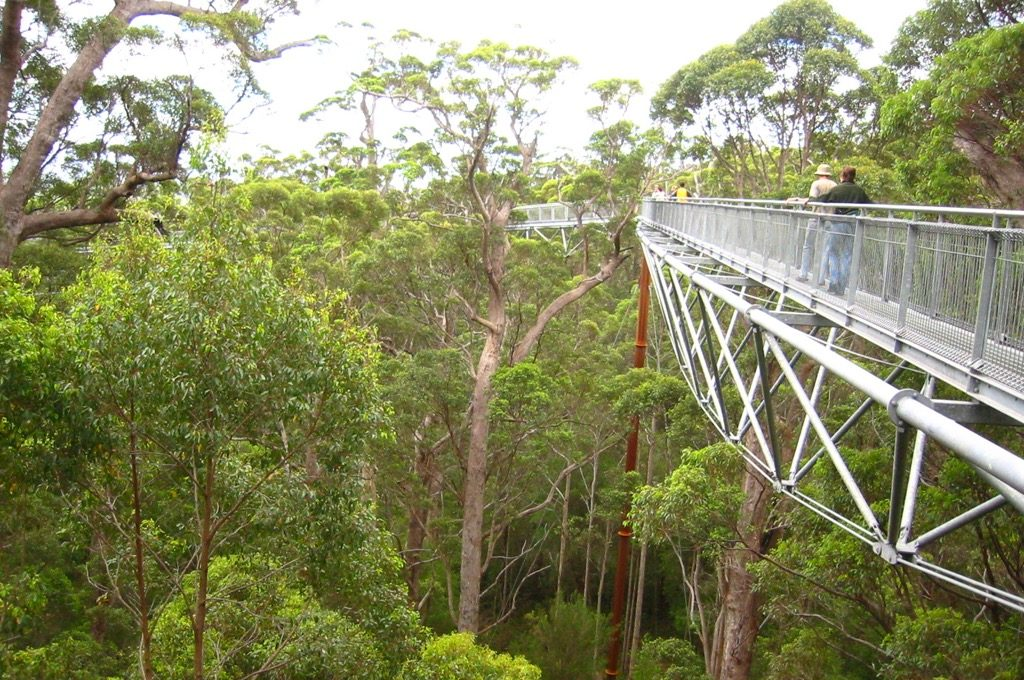 Ancient Empire Walpole Wilderness National Park's Tree Top Walk Canopy Walkways