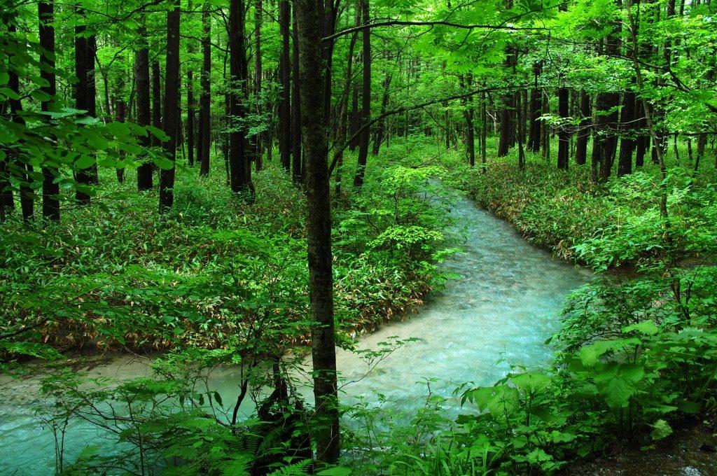 Forest bathing Japan Norway Denmark Mandarin