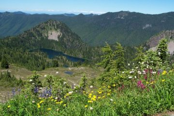 olympic national park, washington. best US national parks