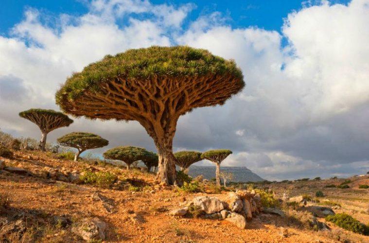Socotra Landscapes