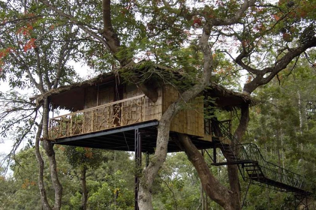 Gul Mohr Tree travel Treehouse Hotel Tranquil