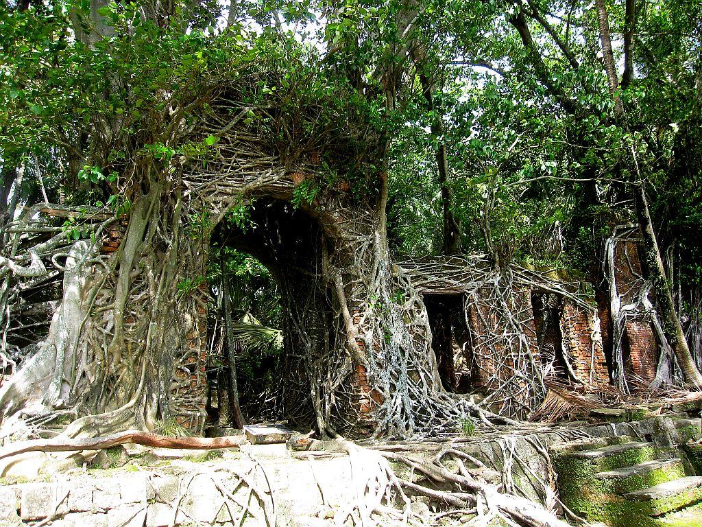 World's Rainforests