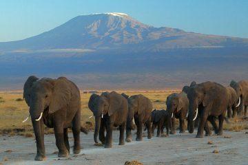 Elephants Mount Kilimanjaro hiking kilimanjaro tanzania trip