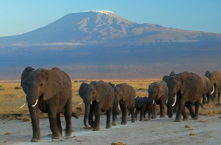 Hiking Kilimanjaro: 7 Incredible Ways to scale Africa's Highest Mountain