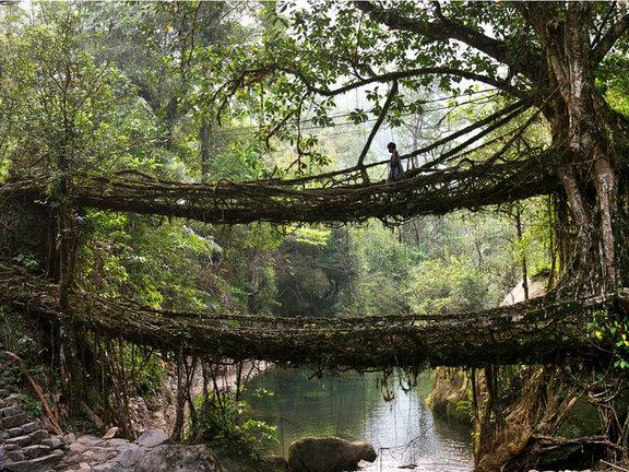 Living Bridge India